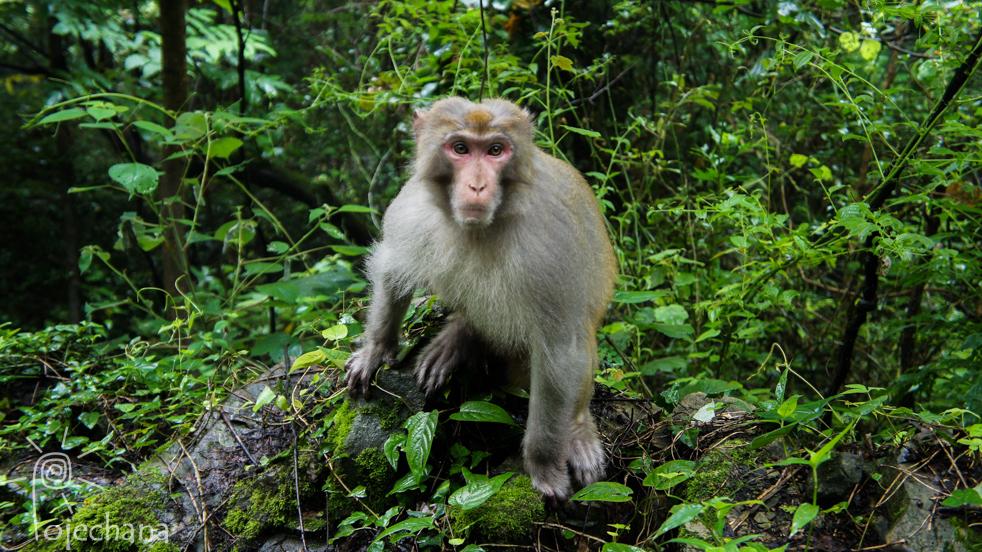 małpy w Avatarze