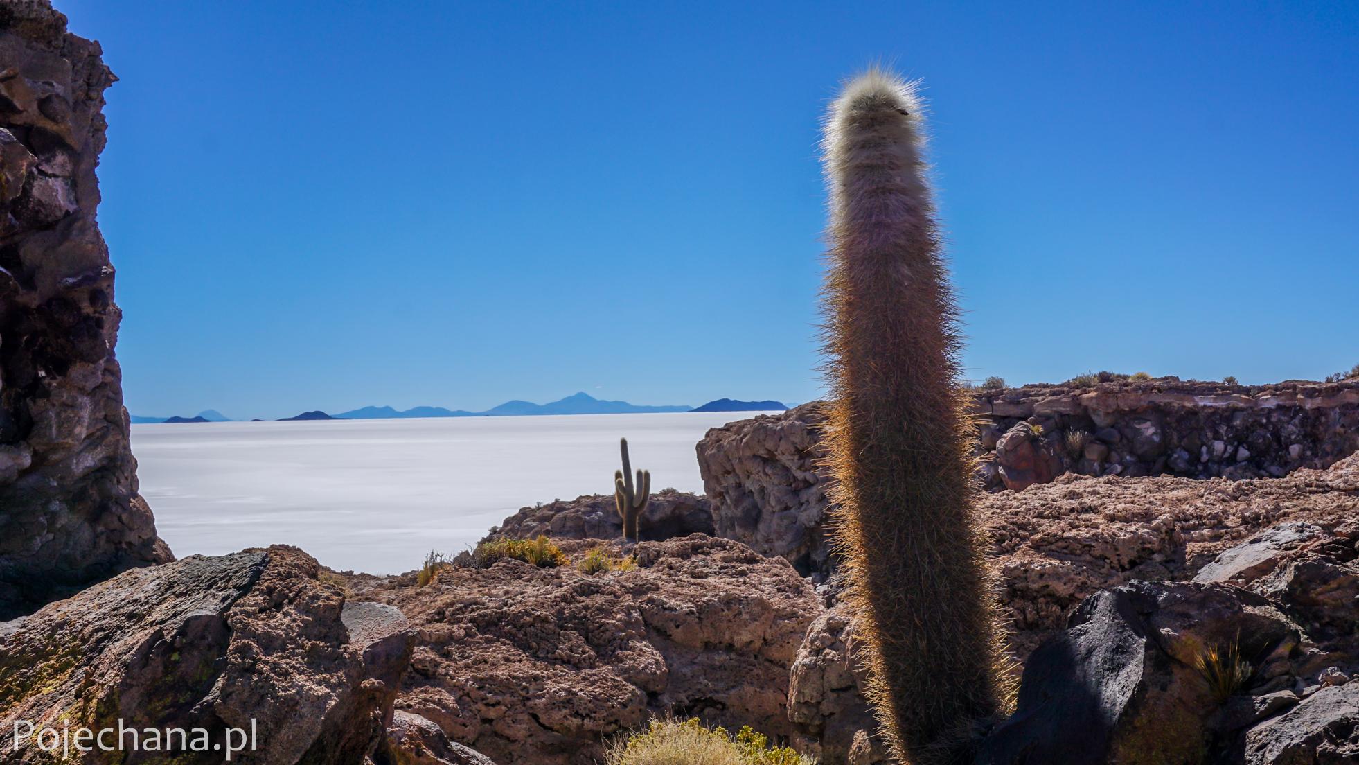 boliwijskie kaktusy