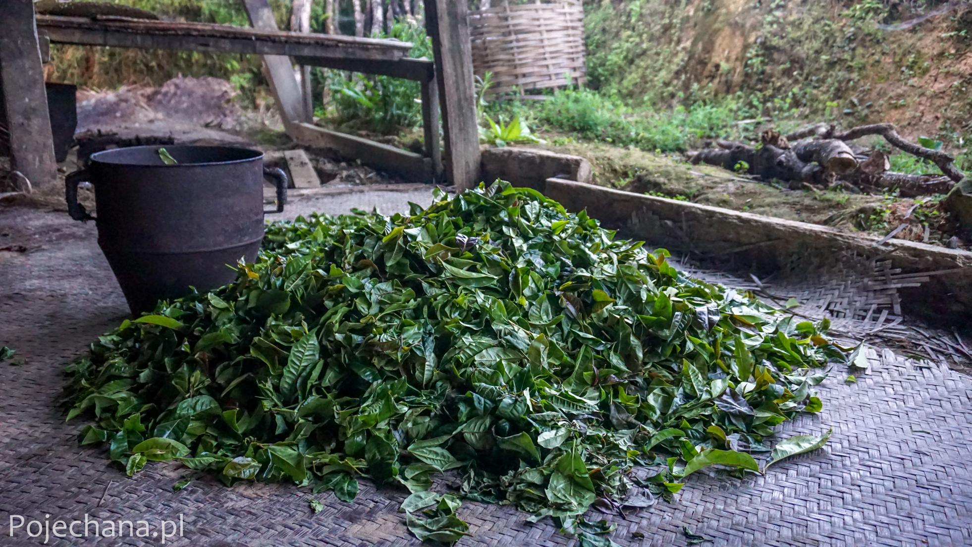 wytwórnia herbaty